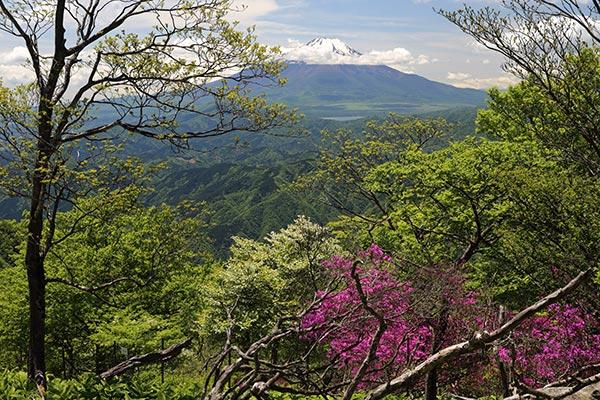 檜洞丸山頂からの富士山